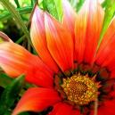 How To Find The Right Flower Delivery Perth
