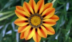 Find the Best Autumn Flowers Perth